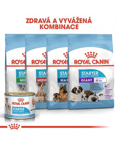 ROYAL CANIN Starter Mousse 195g konzerva pro březí nebo kojící feny a štěňata