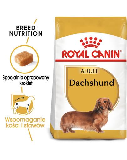ROYAL CANIN Dachshund adult 500g granule pro dospělého jezevčíka