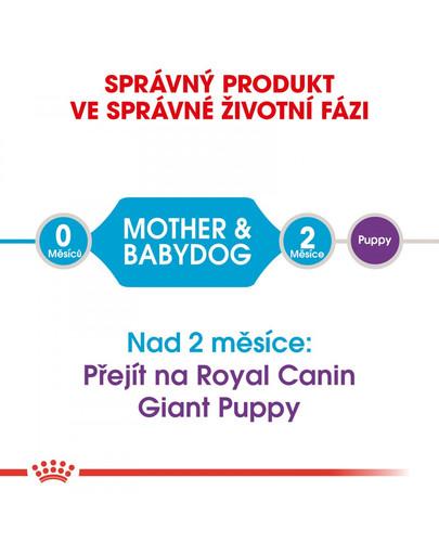 ROYAL CANIN Giant starter mother & babydog 1 kg granule pro březí nebo kojící feny a štěňata
