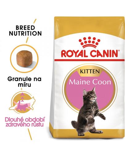 ROYAL CANIN Kitten Maine Coon 400g granule pro mainská mývalí koťata